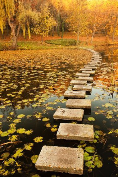 camino estanque